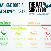 Infographic - How long does a bat survey last?