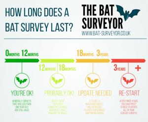 Infographic - How long does a bat survey last?