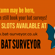 Autumn bat survey
