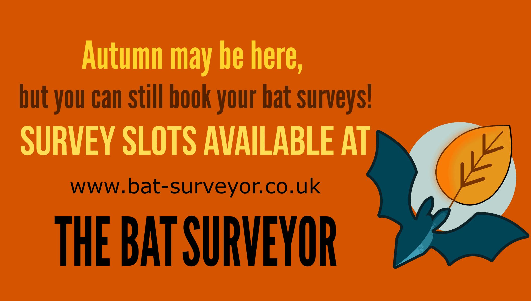 Autumn bat survey