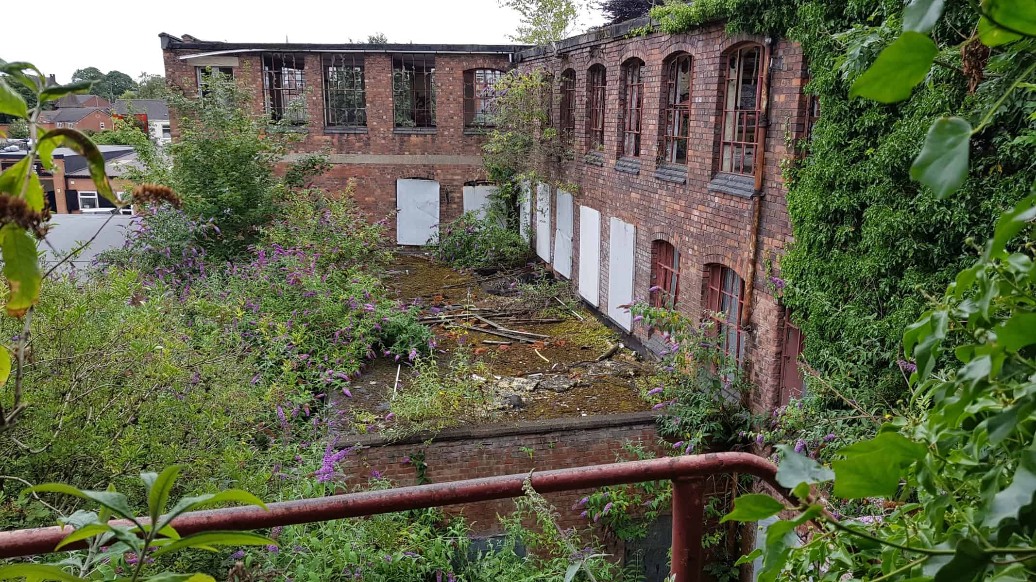 Bat Survey Coke Street Mill, Derby
