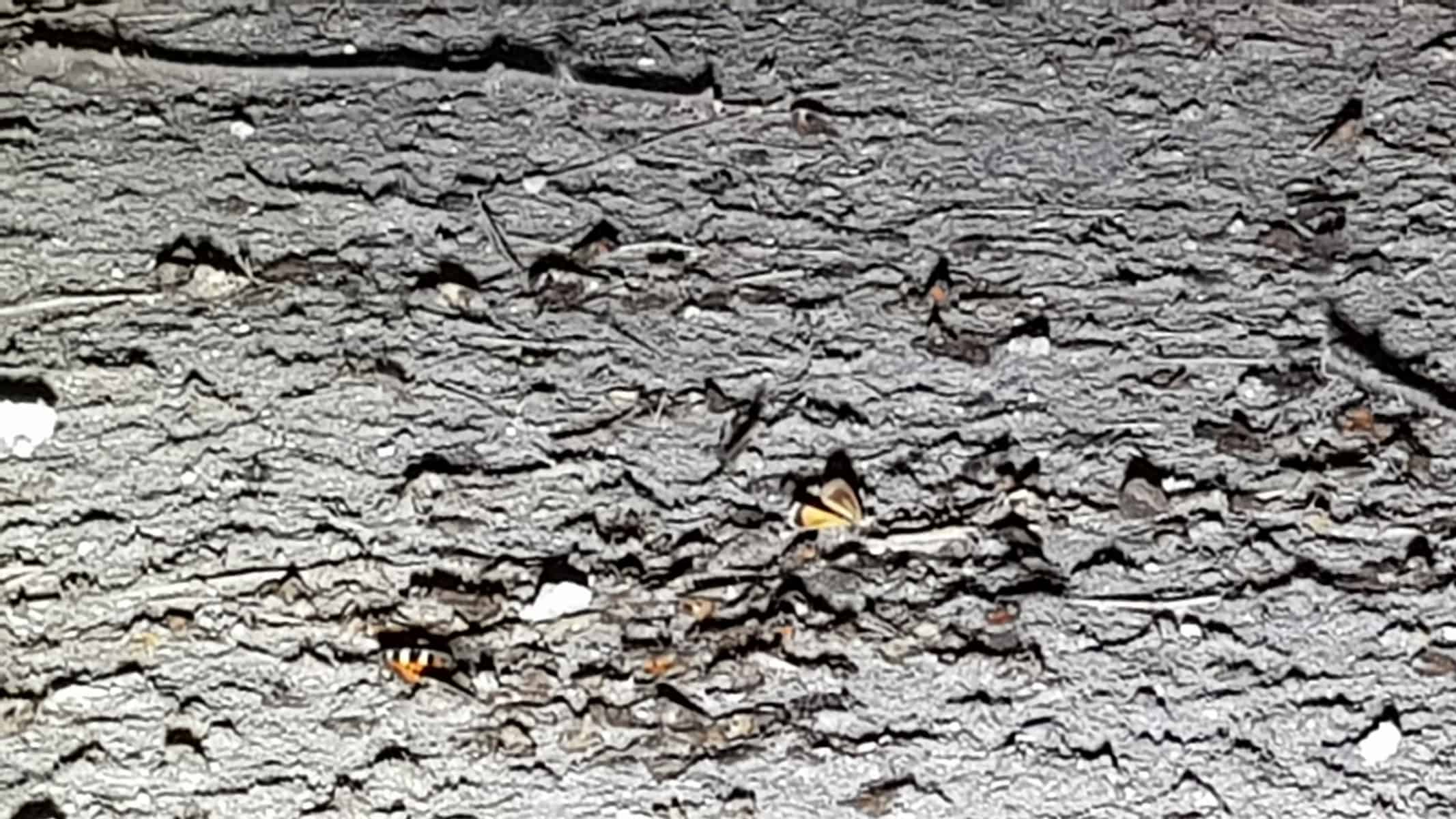 Bat Survey, Litton, Peak District