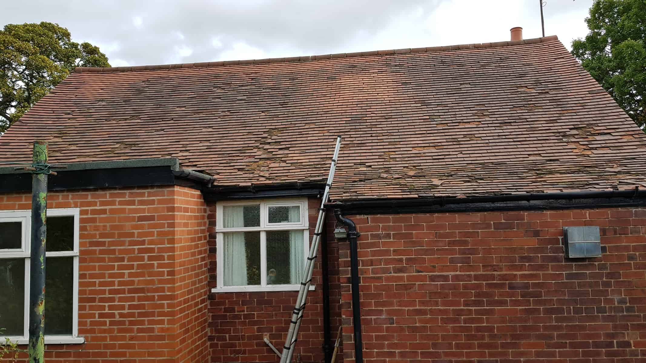 Bat Survey, Holymoorside, Chesterfield